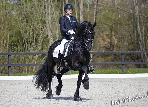 2e Horses2Fly Young Friesian Dressage Competition
