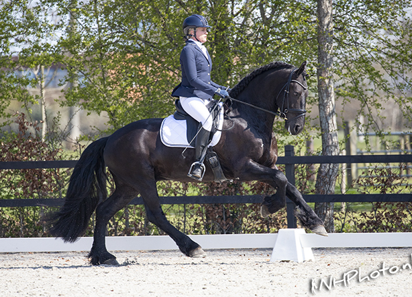 3e Selectie Horse2Fly Friesian Dressage Competition