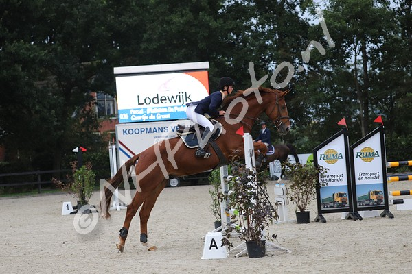 L Paarden (ring 2)